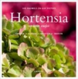 Hortensia en haar zusjes